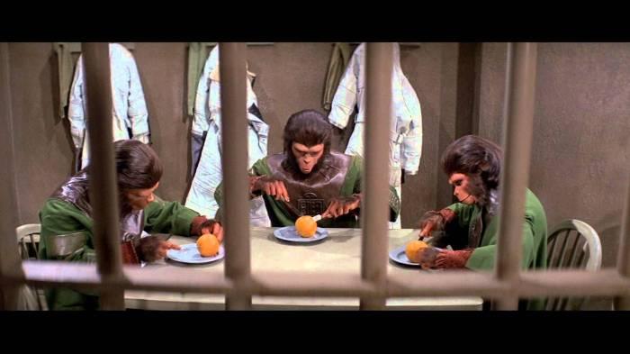 Lle traitement auquel ont droit les singes à leur arrivée sur Terre ne peut que faire analogie avec celui réservé à Taylor et Brent avant eux.
